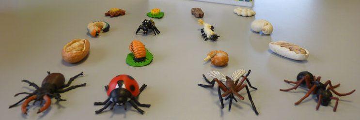 Figurines de 4 espèces d'insectes, avec leurs différents stades de vie